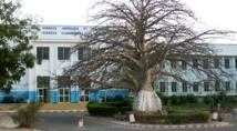 UCAD: les agents de sécurité vacataires réclament le renouvellement de leurs contrats