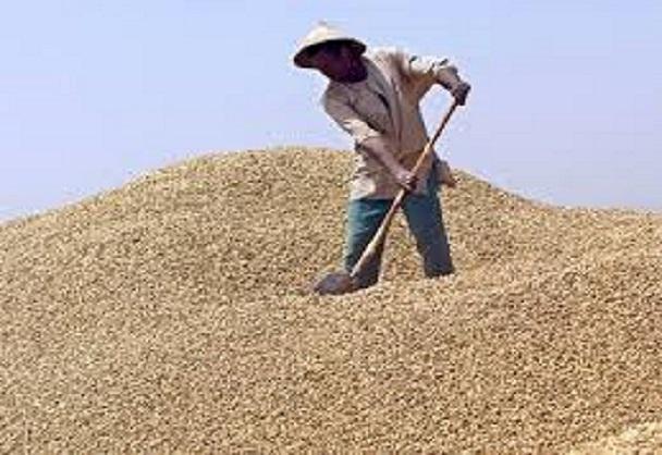 Blocage du marché chinois: Au bassin arachidier, producteurs, opérateurs et ouvriers agricoles crient leur amertume