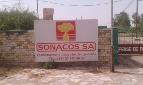 Seules 1 414 tonnes d'arachide collectées: L'heure est grave à la SONACOS de Diourbel