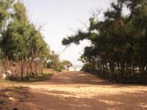 Zone des Niayes -  Attribution de plus de 13ha aux administrateurs territoriaux à Déni Guedj : l'Etat viole le code forestier