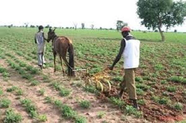Délivrance suspendue du titre foncier sur les terres arables du monde rural : des bombes foncières en attente d'être désamorcées