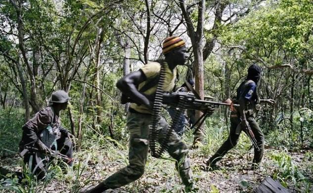 Forêt classée de Bayotte: 09 exploitants forestiers tabassés par des hommes armés