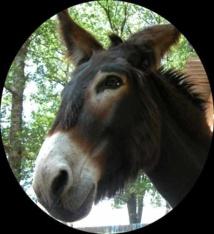 Attaque mystique à la cité Sipres 1, la tête d'un âne déposée devant une maison