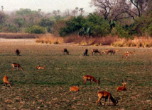 Le Niokolo-Koba sur la liste rouge de l'Unesco des parcs en péril dans le monde