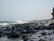 La pollution marine réduit la fertilité de l'homme