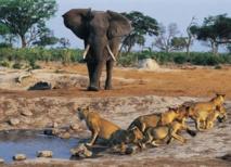 Macky et son gouvernement font-t-ils du tourisme à Niokolokoba ?
