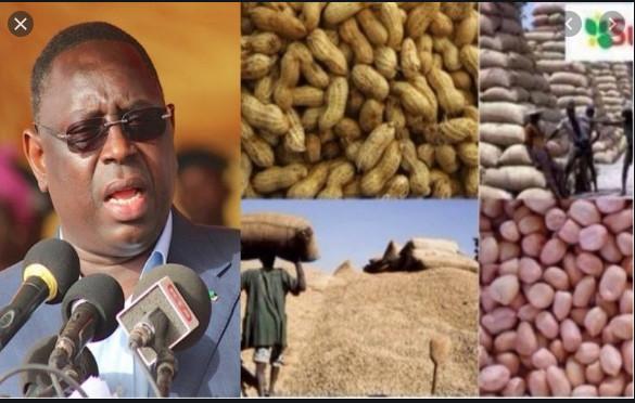 Campagne de commercialisation arachidière: 564 415 tonnes collectées en 98 jours, pour un montant de 170 milliards FCfa