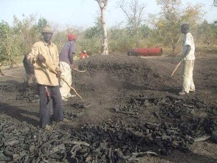Milices forestières : Les exploitants de charbon de bois menacent de paralyser le secteur