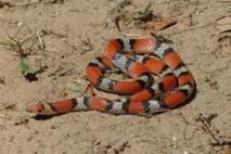 Des serpents sèment la terreur à Fass Cheikh Tidiane