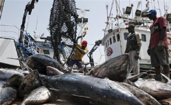 Accords de pêche: «Le Sénégal gagne moins de 10 milliards en 5 ans», révèle Moustapha Dieng, syndicaliste