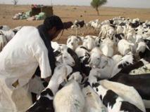 Les éleveurs du Sénégal jugent très court le délai de 5 mois pour l'élaboration du code Pastoral