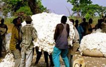 Annulation de la dette des cotonculteurs : les précisions de la Sodefitex …