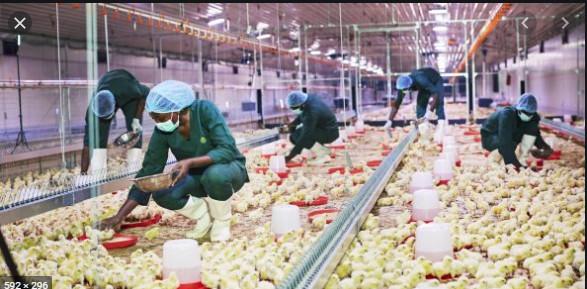 Agro-industrie: Une intensification des aménagements agricoles encouragée