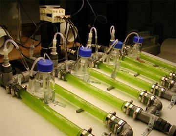 Les biocarburants face au défi de l'alimentation