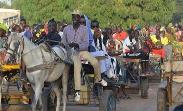 Vers une ruralisation de Dakar: Après les charrettes à cheval, les ânes arrivent !