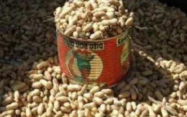 « Bonne campagne » arachidière: Pourtant, faute de graines, 2 000 saisonniers risquent de perdre leurs emplois fin mai