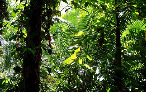 Casamance / Leurs familles entre espoir et angoisse: 4 personnes portées disparus dans la forêt de Niadiou depuis 2 ans
