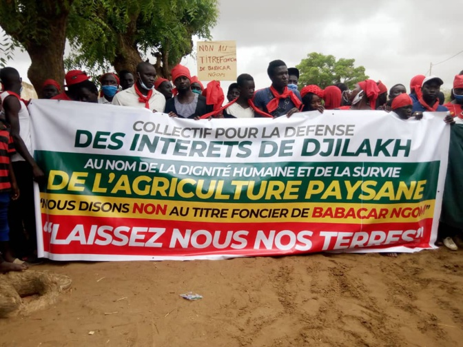 """Contentieux foncier à Djilakh: Babacar Ngom """"lâche"""" les 300 hectares litigieux"""