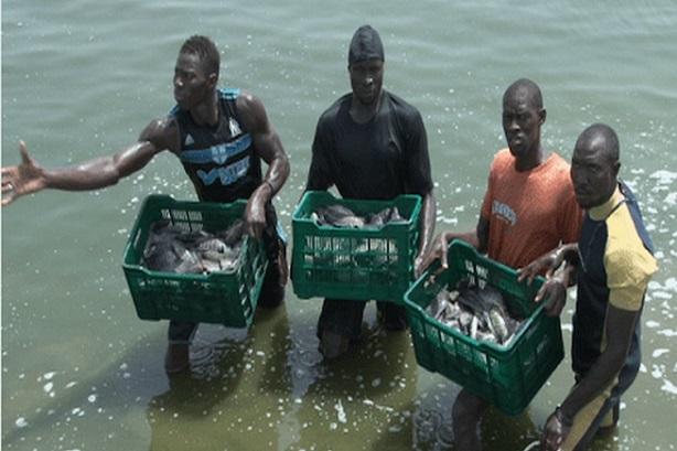 Projet des pôles aquacoles : Le Sénégal casque un milliard FCfa pour industrialiser la filière de l'aquaculture