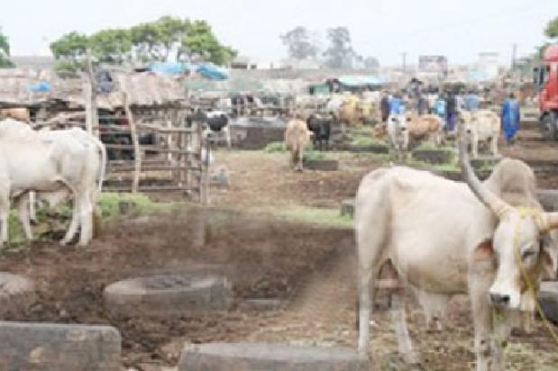 Vive tension au parc des gros ruminants de Diamaguène Sicap Mbao: Les éleveurs interpellent le Président Macky Sall
