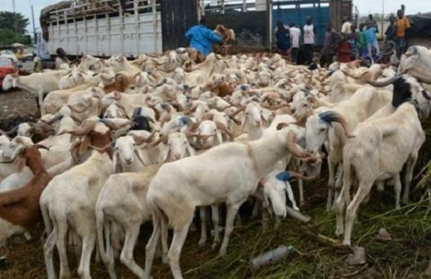 Tabaski 2021 : Le marché sera bien approvisionné en moutons d'après le directeur du Commerce intérieur