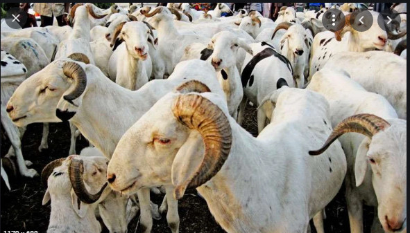 Tabaski: L'approvisionnement correct du marché en moutons, instruit
