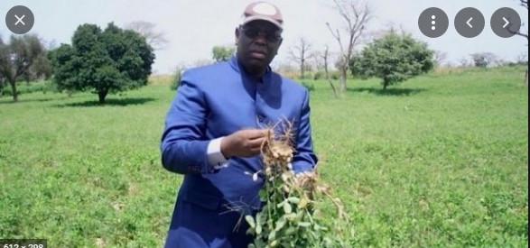 Campagne de production agricole 2021: Macky Sall exige une accélération de la distribution des engrais et...