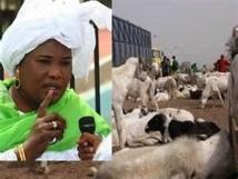 Tabaski 2013 : 720 000 moutons attendus, aucune garantie sur les prix