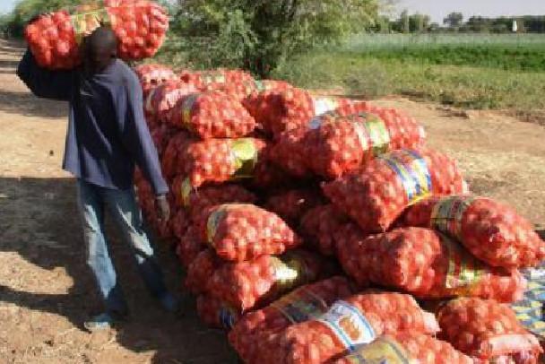 Oignons: Les producteurs sollicitent l'aide de l'Etat