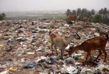 Lancement d'un projet de 17,5 milliards de FCFA pour la gestion des déchets solides urbains