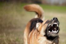 Hamo 5 : Un chien errant fait 2 victimes avant d'être maitrisé et tué