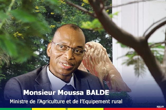 Kaolack / Polémique sur la distribution des intrants: Les pro-Baldé s'en prennent aux opérateurs
