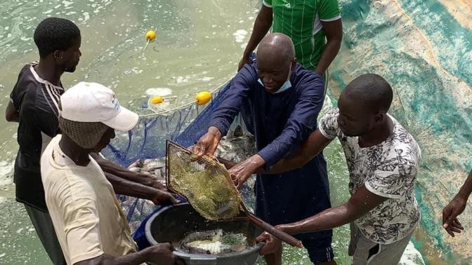 Première « récolte » de poissons du bassin piscicole de Kilim (Ouarkhokh, Djolof)