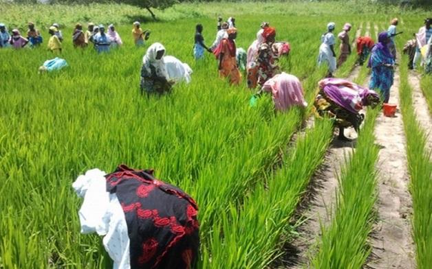 Manque criard d'engrais: Les agriculteurs crient au scandale