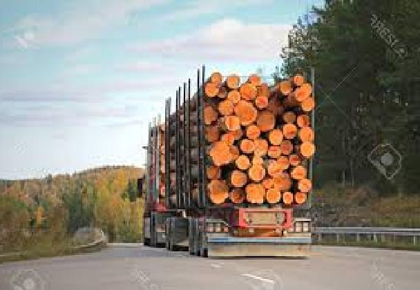 Arrestation d'un camion remorque chargé de bois à Sansamba-Sèdhiou  : Les jeunes s'érigent en boucliers contre le trafic