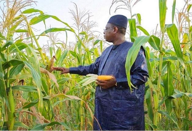 Goulots d'étranglement de la politique alimentaire du pays: les recommandations de CICODEV Afrique au Sénégal