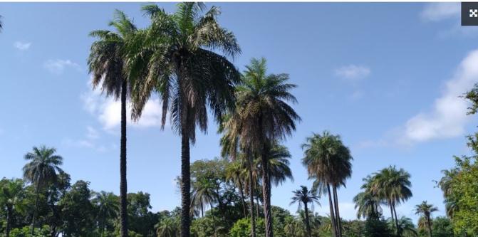 Bignona: Des palmeraies menacées de disparition