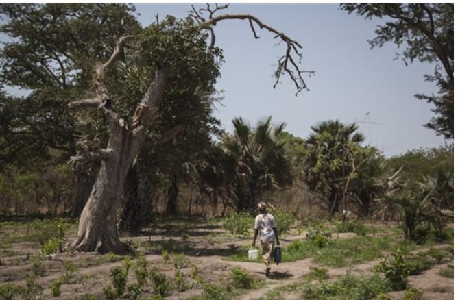 Bokidiawé: Un collectif proteste contre le lotissement d'un site de 114 hectares