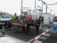 Banlieue de Dakar : La police casse le gang des charretiers