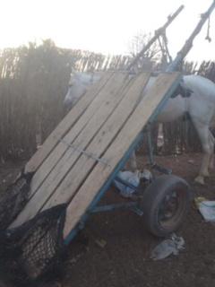 Accident mortel à Koumpentoum : Le cheval fou de A. Bâ se déchaîne et le tue