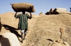Audio - Focus du jour sur la campagne arachidière