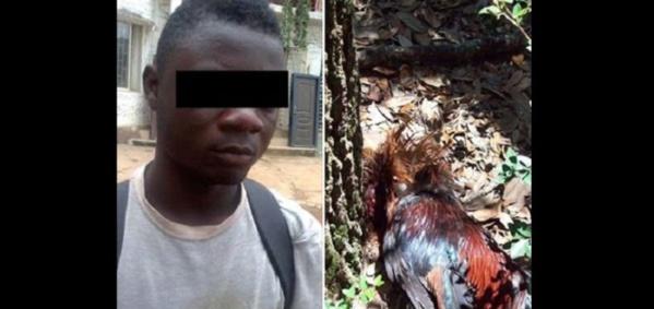 Un jeune homme couche avec une poule et dit avoir été poussé par un esprit