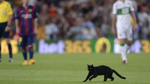 Photos-Les « Xons » du Barça: Un chat noir au Camp Nou