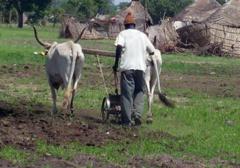 Cri du cœur pour le monde rural - Par Cheikh Fatma Mbacké