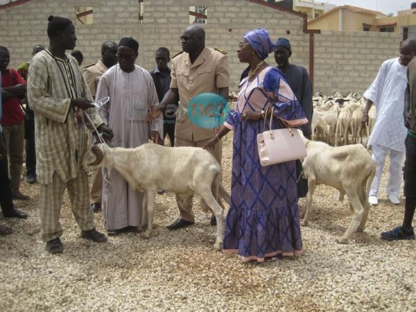 Photos - La DGPSSN offre des moutons aux familles démunies