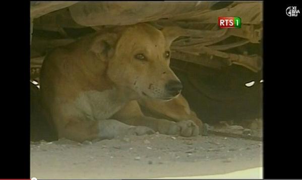 Un mystérieux chien tue six personnes à Tivaouane Peulh : Des familles s'accusent d'anthopophagie… à la gendarmerie