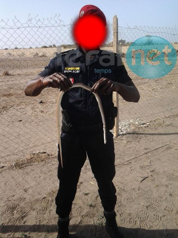 Mort de Bassirou Faye : Le policier Tombon Oualy, présumé tireur, arrêté
