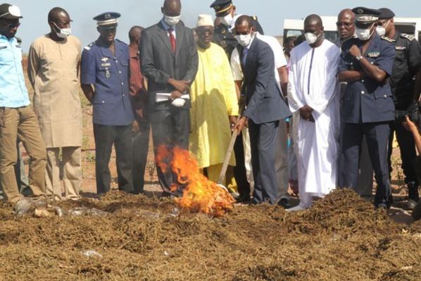 Quelle politique répressive pour le cannabis au Sénégal ?