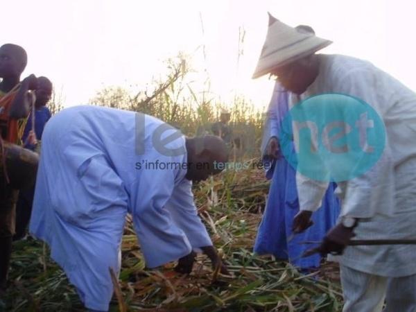 Lagane, édition 2014: Appel pour les champs de mil