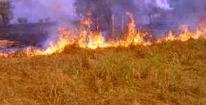 Linguère : 29.550 ha de tapis herbacé brûlés
